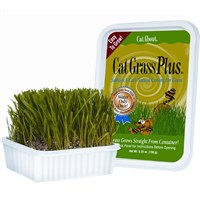 Image of Miracle Care Cat A'bout Cat Grass Plus Tub (150 grams)